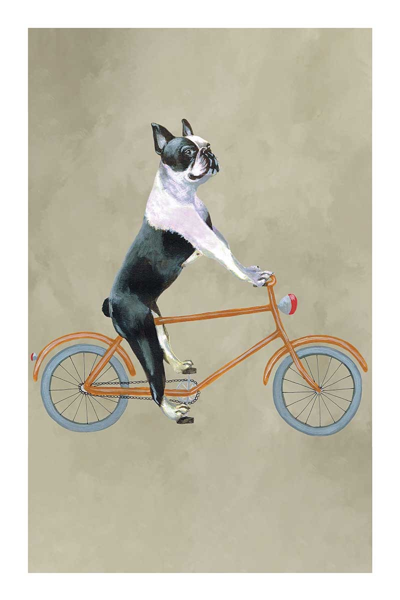 Boston Terrier on Bicycle