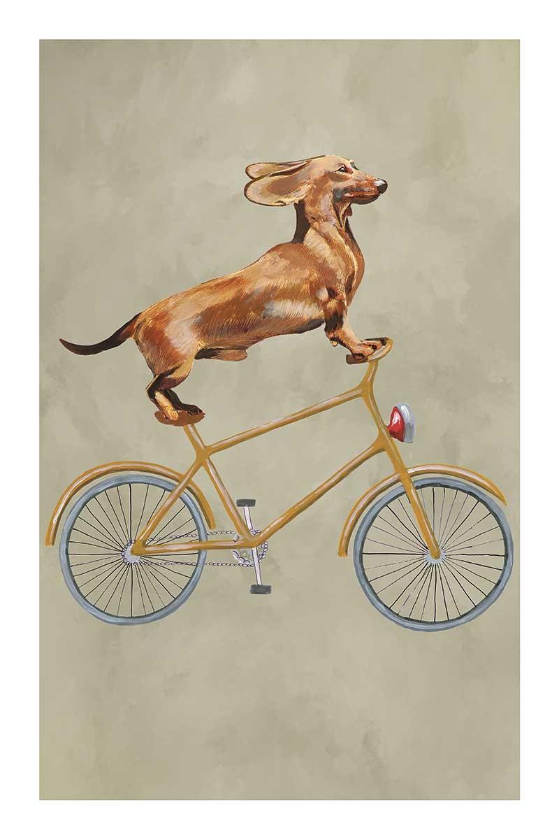 Dachshund on Bicycle