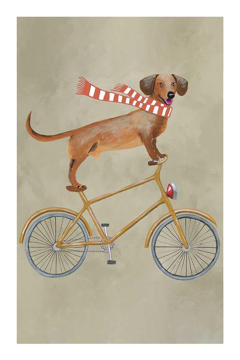 Dachshund on Bicycle 2