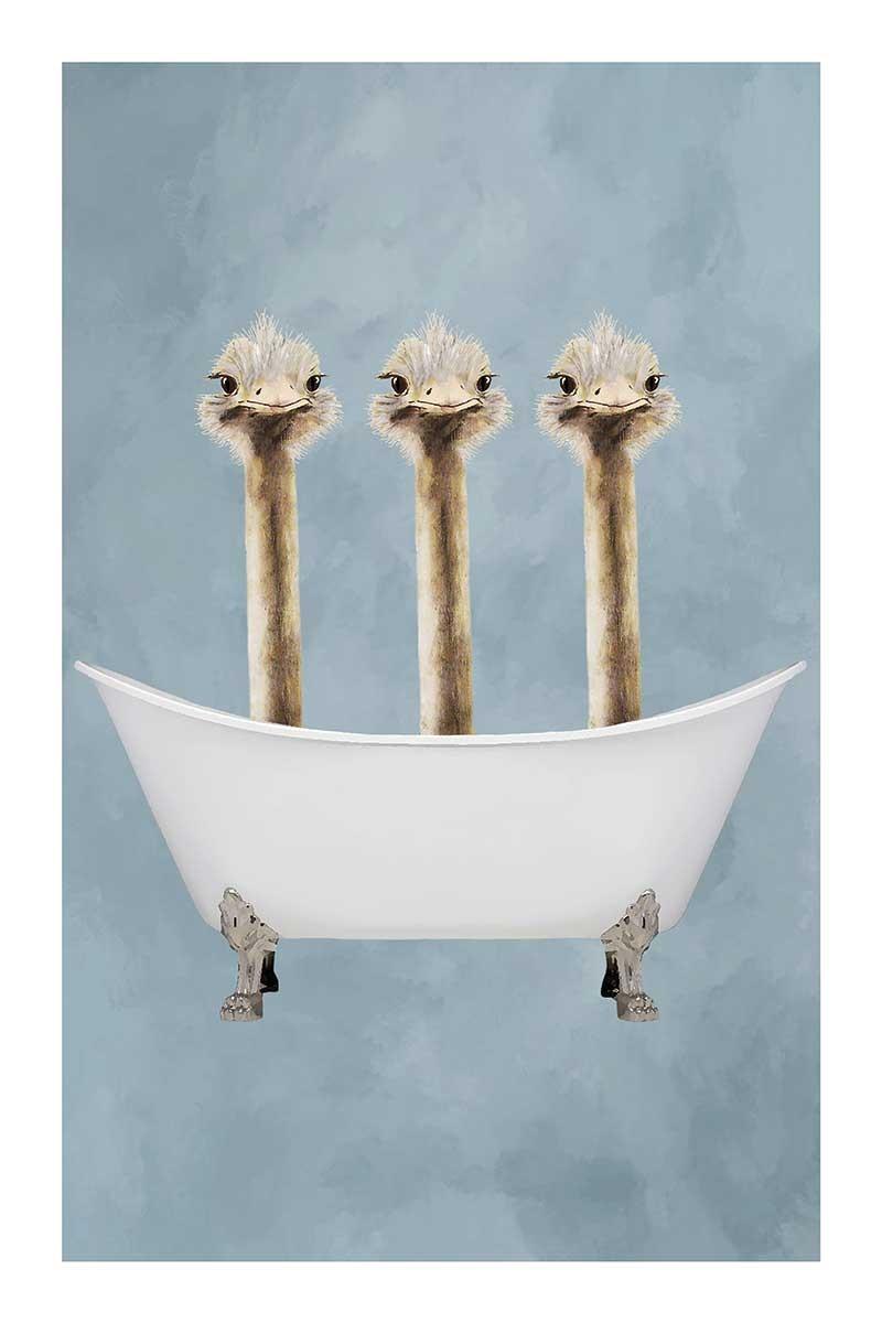 Ostriches in Bathtub