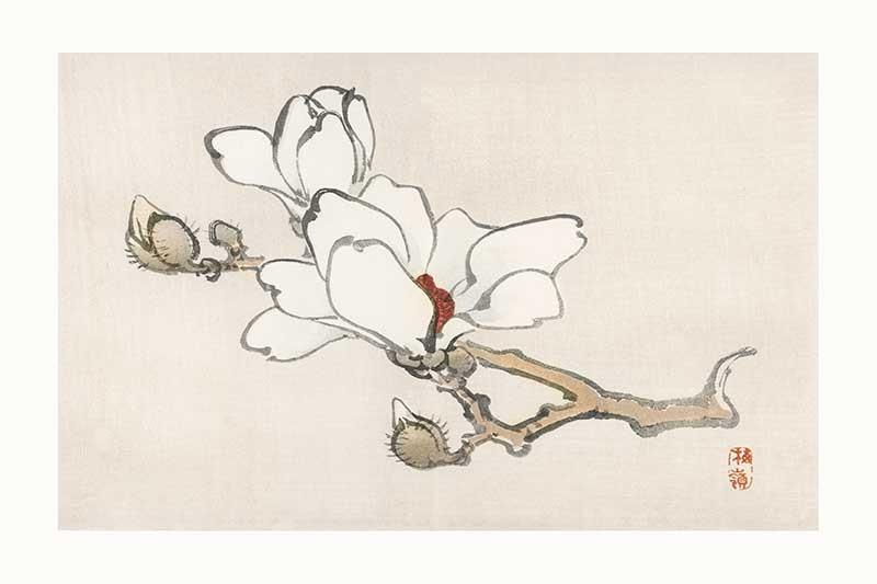 Magnolia Kono