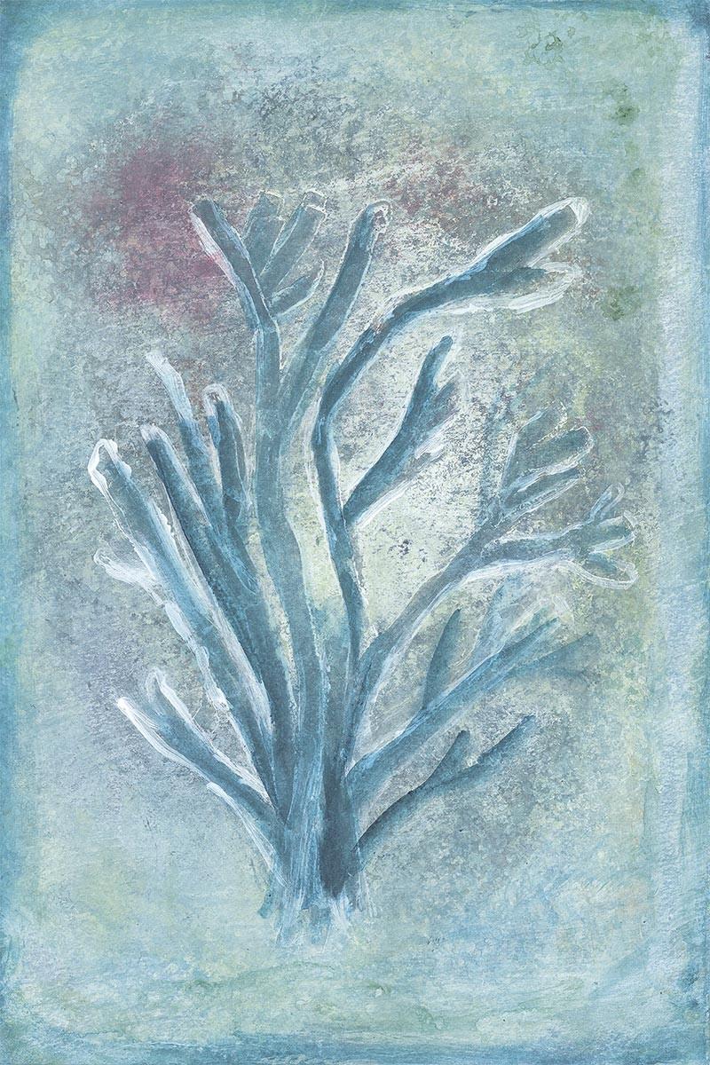 Coral Verdoso I