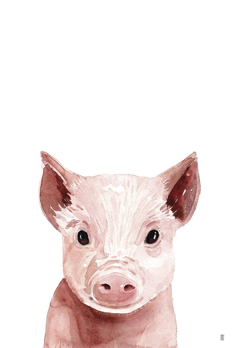 Piglet Portrait