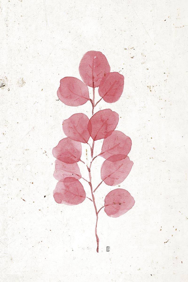 Planta Coral II