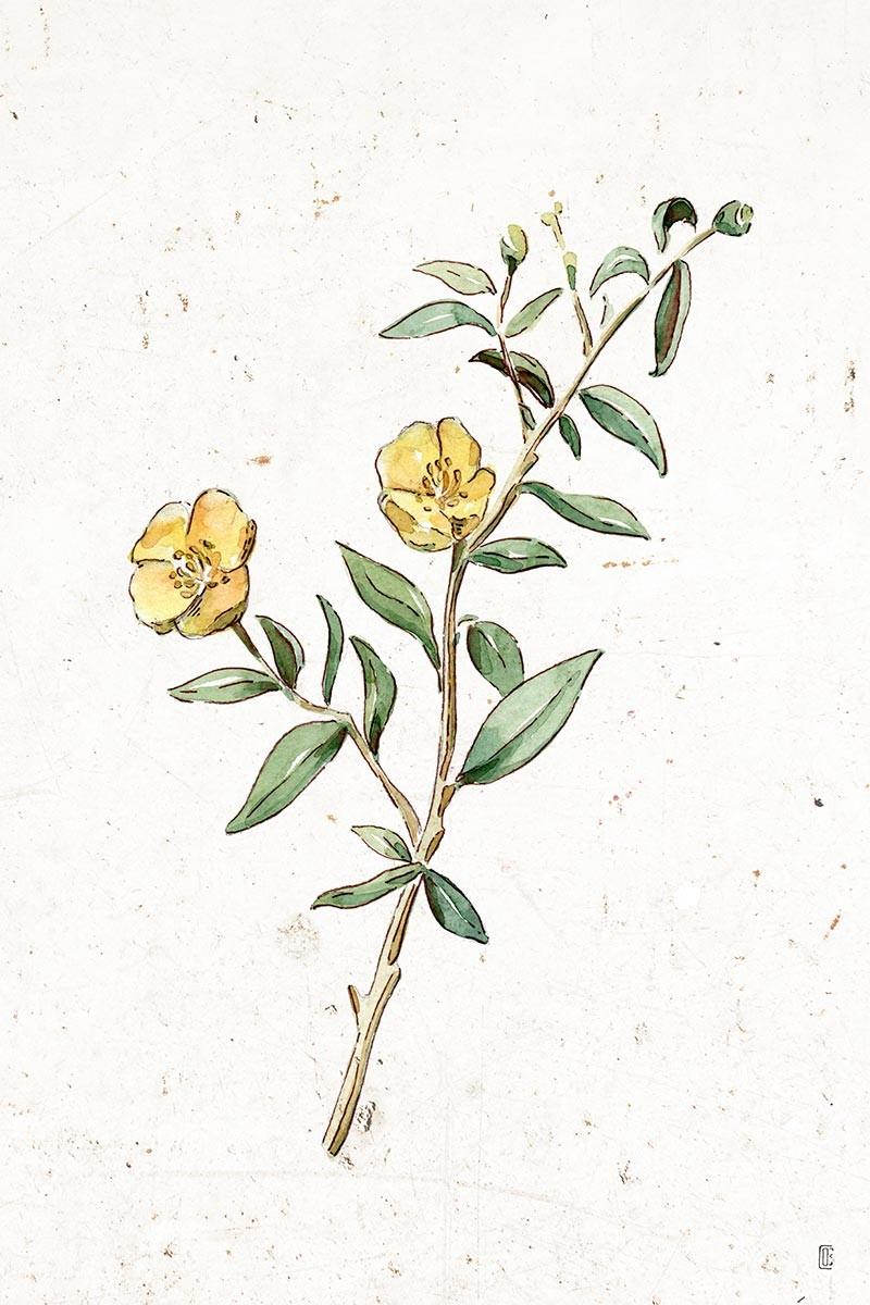 Flor Ortiz I