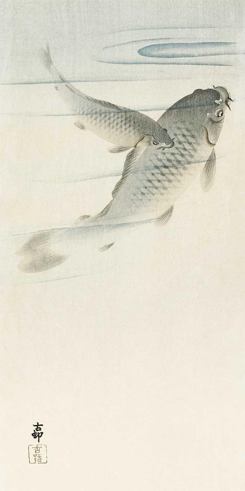 Carpa de Ohara