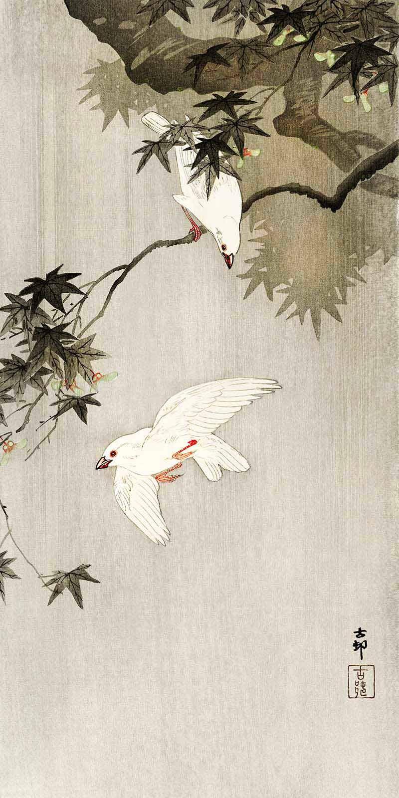 Pájaros en la Lluvia