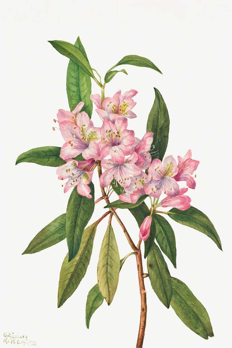 Flores Botánica II