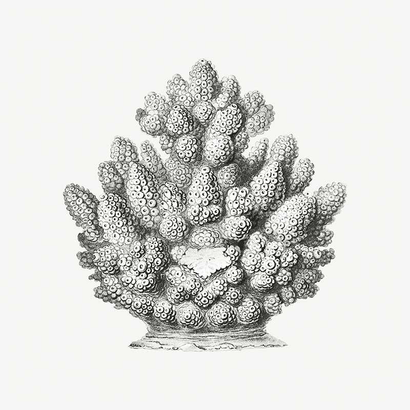 Conchas Marinas II