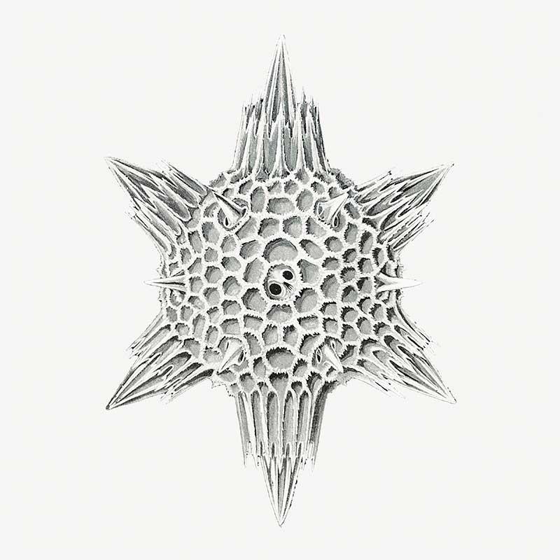 Conchas Marinas III