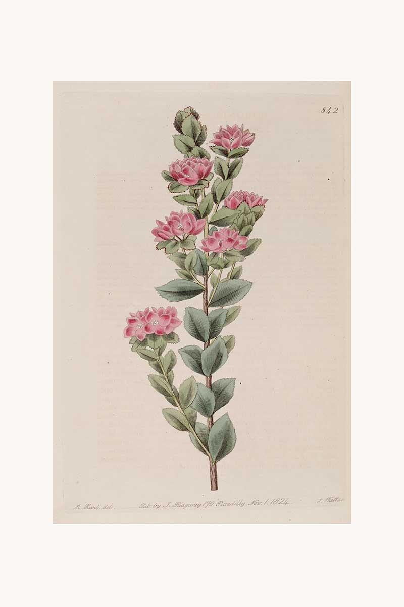 Edwards Botanical I