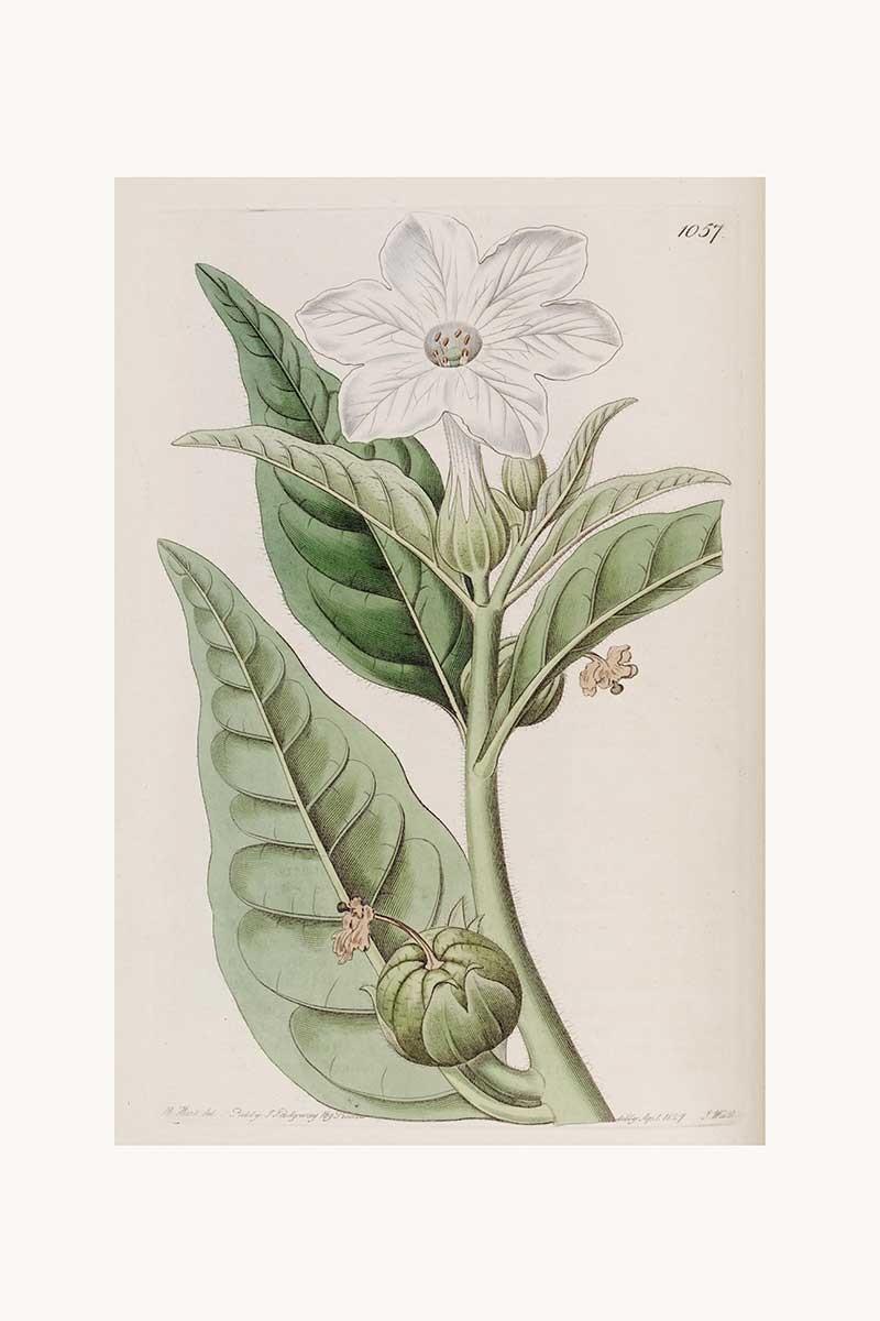 Edwards Botanical II