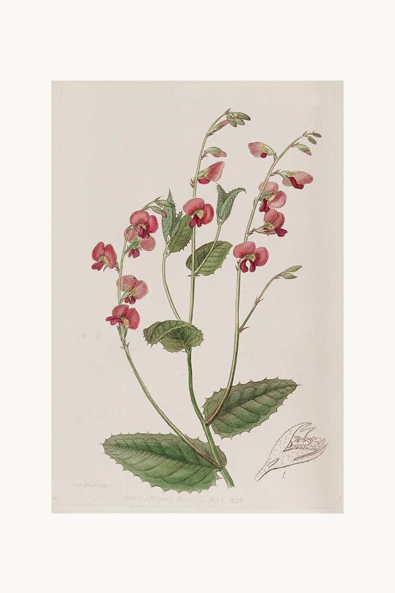 Edwards Botanical III