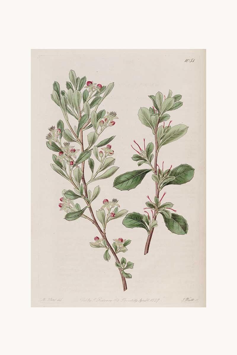Edwards Botanical VI
