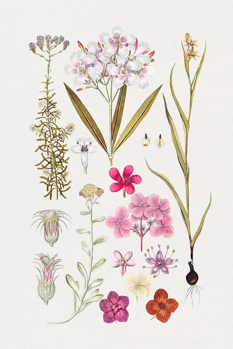 Plantas Silvestres I
