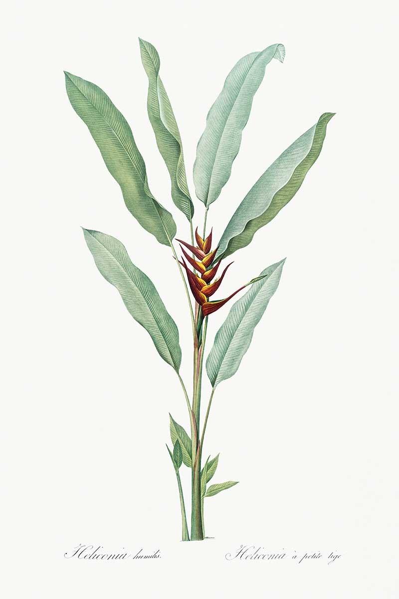 Planta Tropical I