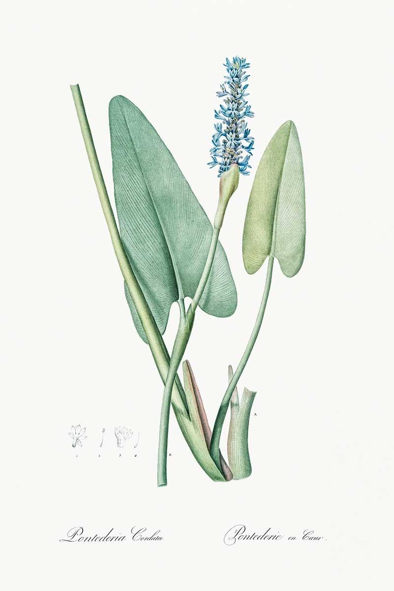 Planta Tropical V