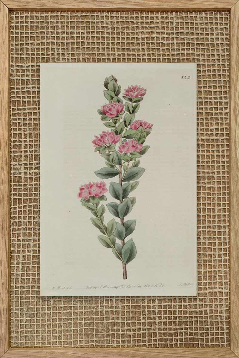 Eduards Botanical I