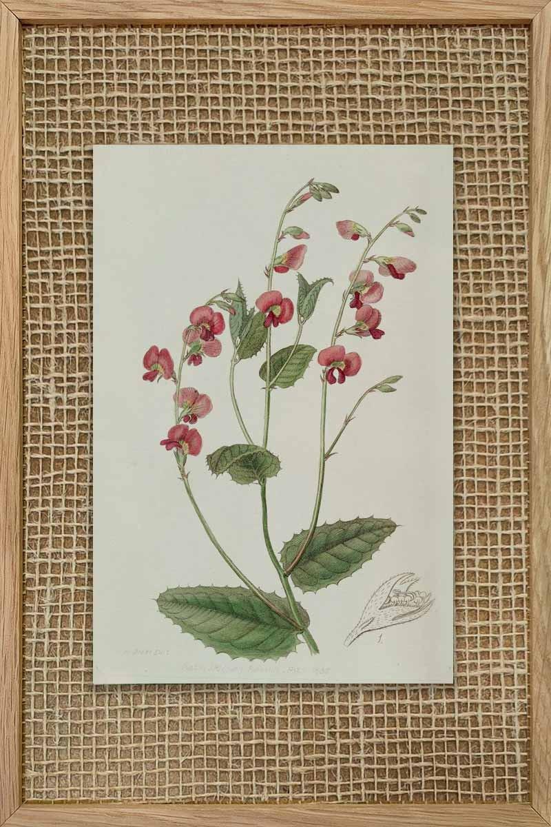 Eduards Botanical III