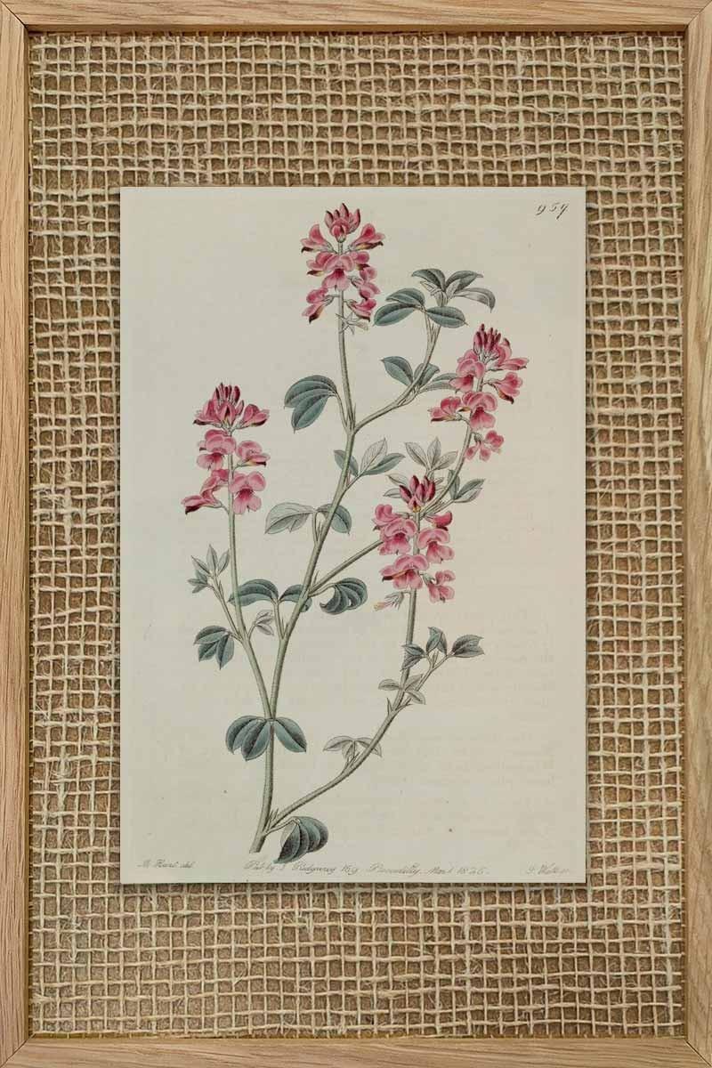 Eduards Botanical IV