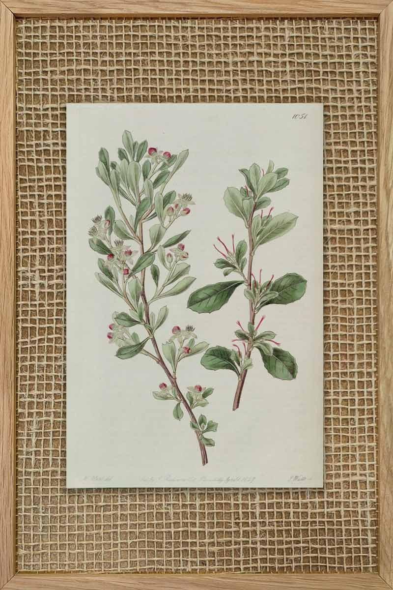 Eduards Botanical VI