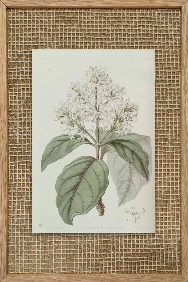 Eduards Botanical VIII
